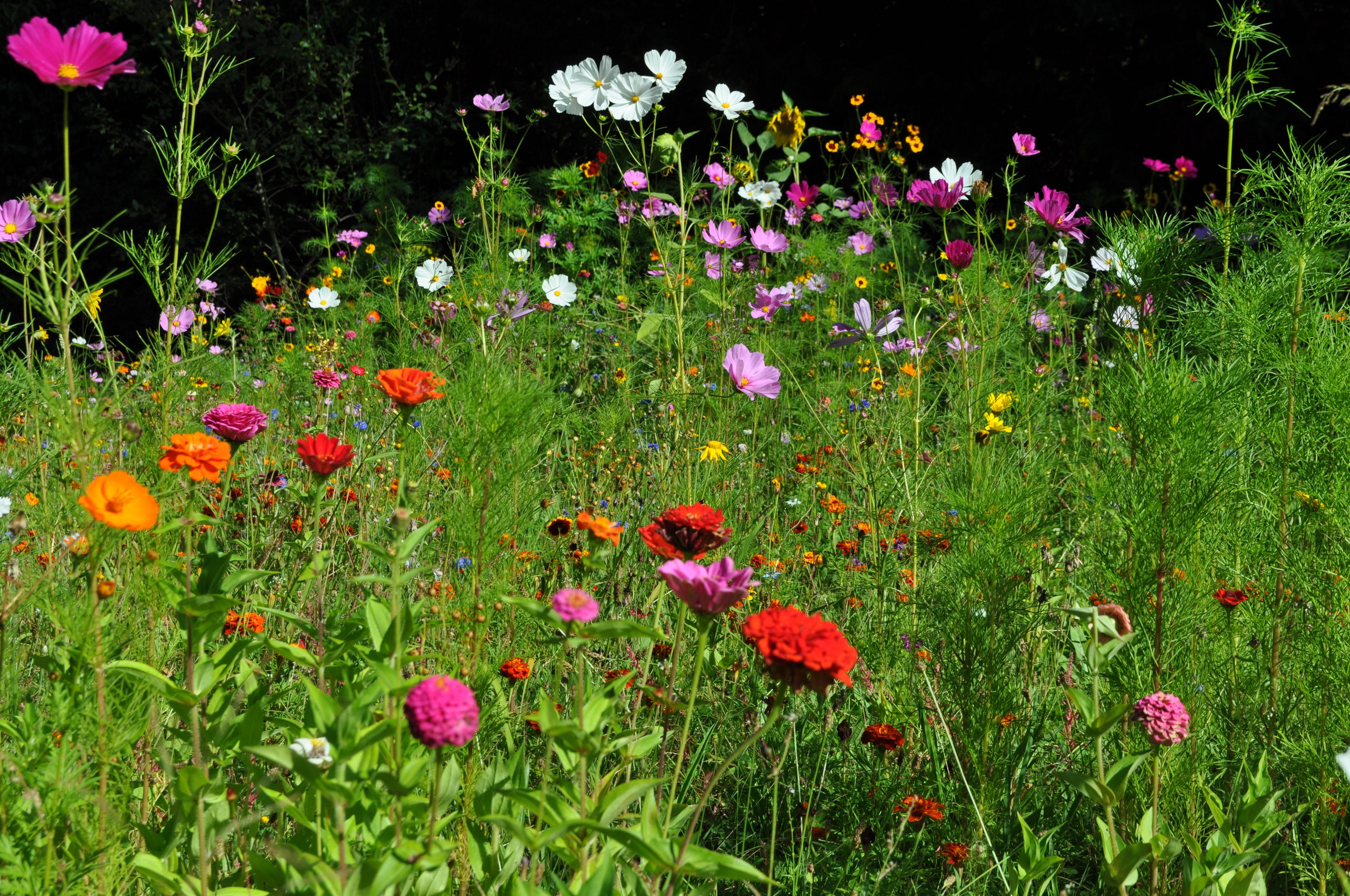 Le jardin le jardin de joeliah le jardin de joeliah for Le jardin vouvrillon