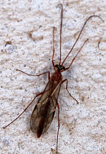 L 39 insecte et le prisonnier le jardin de joeliah le for Traitement vers gris jardin