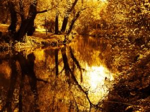 riviereor