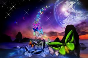 terrepapillons