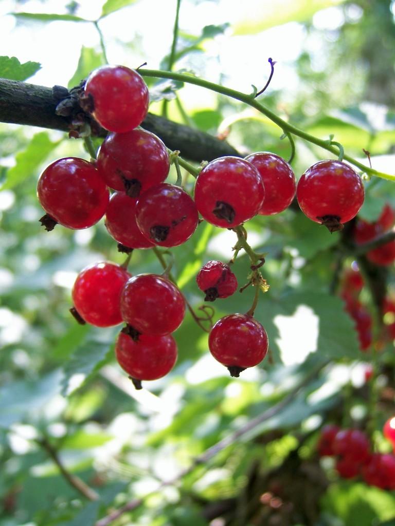 Le fruit de l 39 amour erena le jardin de joeliah le - Fruit de l amandier ...