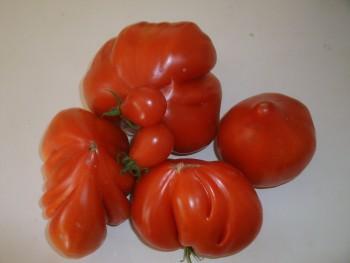 Joéliah tomates