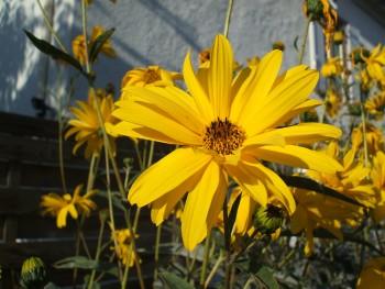 Fleur-Joeliah