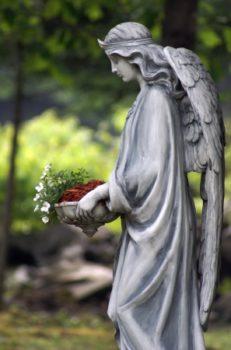 7111046 - angel